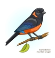 Scarlet bellied mountain tanager bird vector image vector image