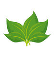 stem with leaves icon vector image vector image