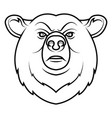 a bear head logo vector image vector image