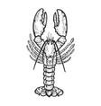 lobster sea animal sketch engraving vector image vector image