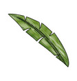 natural leave palm foliage tropical image vector image vector image