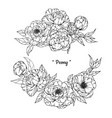 peony flower and leaf hand drawn botanical vector image vector image