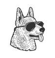 shepherd in sunglasses sketch vector image vector image