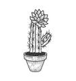 blooming cactus in pot sketch vector image
