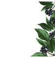 blue berry realistic branch elegant card vector image