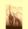 wild giraffes in african sunset vector image