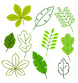 set of stylized green leaves spring or summer vector image