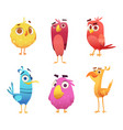angry cartoon birds chicken eagles canary animal vector image vector image