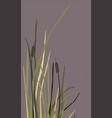 bush swamp reed on a lake vector image vector image
