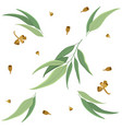 eucalyptus leaves and seeds square pattern vector image vector image