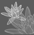 hand drawn lotus flower vector image
