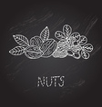 hand drawn nuts vector image