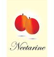 Nectarine vector image vector image