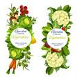 organic natural vegetables farm harvest vector image vector image