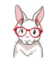 rabbit portrait with red glasses isolated rabbit vector image vector image