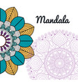 beautiful mandala design vector image