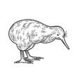 kiwi bird sketch vector image vector image