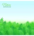 Natural background with grass vector image vector image