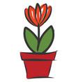 orange flower in red pot on white background vector image vector image