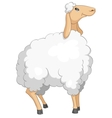 cartoon character sheep vector image vector image
