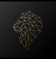golden polygonal lion isolated vector image vector image