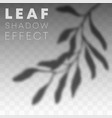 leaf shadow overlay effect on transparent vector image