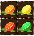 citrus fruit vector image vector image