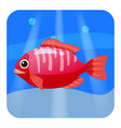 cute beautiful red tropical fish on sea vector image vector image