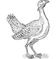Great bustard bird drawing vector image vector image