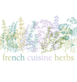 herbs of provence vector image vector image