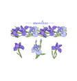 iris flowers isolated and seamless pattern vector image vector image