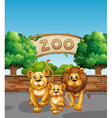 Lion family in the zoo vector image vector image