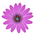 Purple flower isolated on white vector image