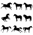 Horses Galloping and Standing Silhouette detailed vector image