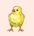 hand drawn funny little chick vector image