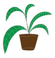 palm plant with long green leaves in brown flower vector image