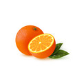 realistic orange with leaves vector image vector image