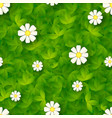 seamless pattern with green grass and camomiles vector image