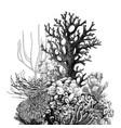 hand drawn coral reef vector image vector image