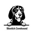 peeking dog - bluetick coonhound breed - head vector image vector image