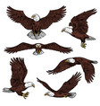 bald eagle predatory birds sketch vector image
