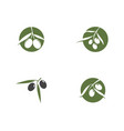 olive icon vector image vector image