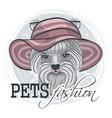 pets fashion look vector image vector image