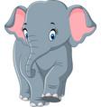 cute elephant cartoon vector image vector image