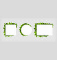 group banner frames with green leaves vector image