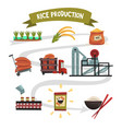 infographic template of rice production from vector image vector image