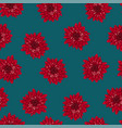 red chrysanthemum on indigo blue background vector image vector image