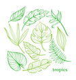 set of tropical leaves line drawing hand-drawn vector image