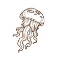 jellyfish with tentacles hand drawn sketch vector image