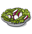 salad with fresh radish and lettuce vector image